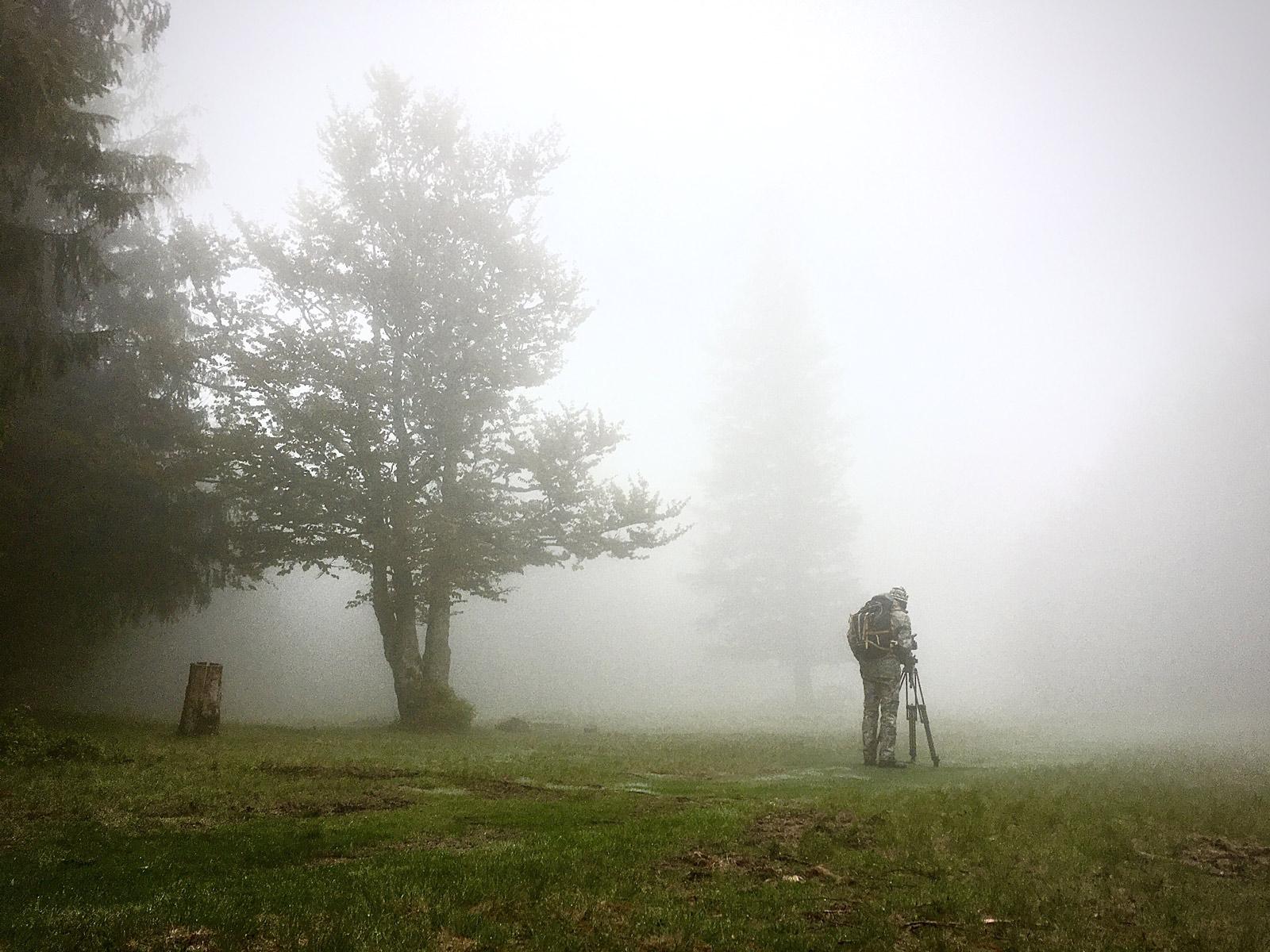 photo de nature embrumé - Iffcam
