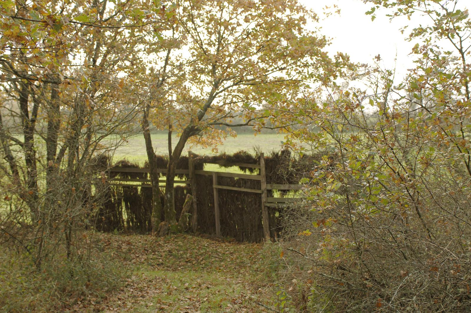photo de mur de camouflage - Iffcam